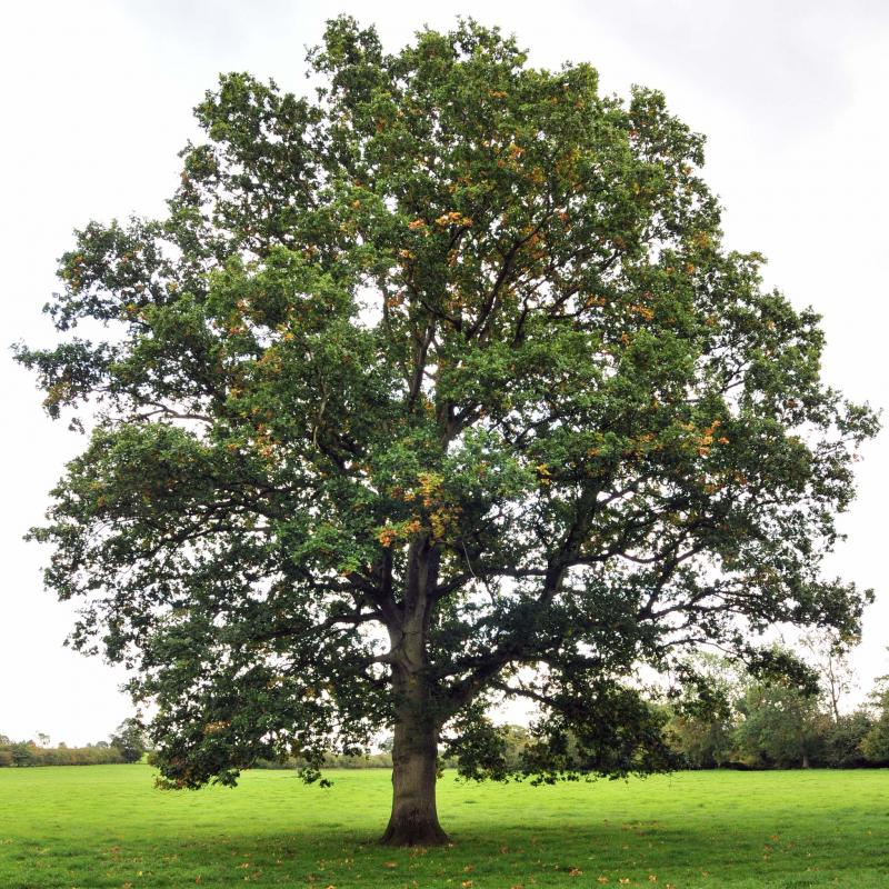 <p>Fotolio</p><p>Research shows trees can tell when their branches are swaying in the wind and the difference between hot and cold.</p>