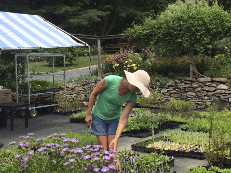 <p>Adrian Higgins / Washington Post files</p><p>Melanie Ruckle at her Putnam Hill Nursery in Forest Hill, Md. It's a family-owned business, but it seems wrong to call it a mom-and-pop shop, given Ruckle's knowledge of and sophisticated approach to horticulture.</p>