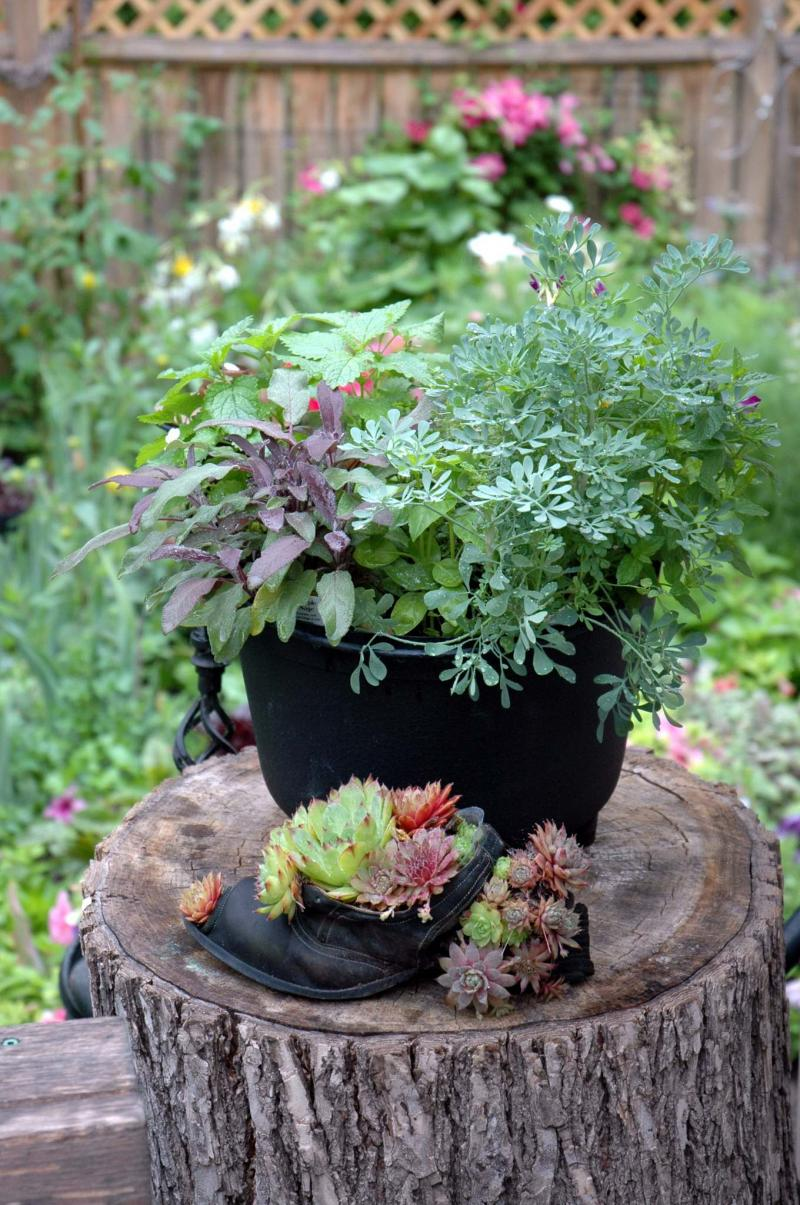 <p>Teresa Lopata</p><p>Mixed herb containers should have good drainage and access to full sun. This pretty example is planted with basil and lemon balm. </p></p>