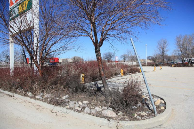 <p>Michael Allen / Winnipeg Free Press</p><p>Berms may be a nice landscaping touch, but they're not always the best growing spot for some trees and shrubs.</p>