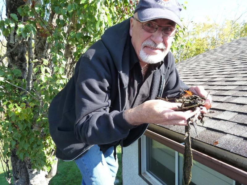 <p>Laurie Mustard / Winnipeg Free Press</p><p>Laurie Mustard hanging in the gutter... or, as he prefers, eavestrough. It's important to get eavestroughs cleaned before winter, otherwise a frozen blockage of leaves and branches could lead to future damage.</p>