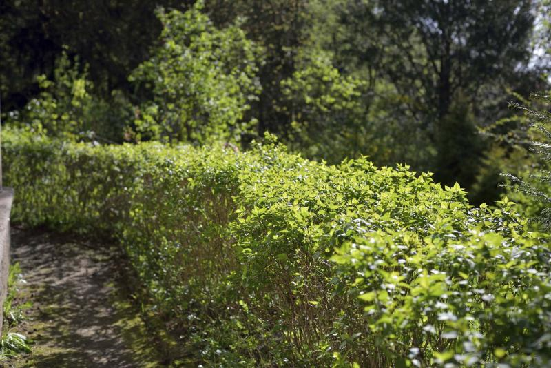<p>Fotolia </p><p>Popular in Europe, green fences appear to be gaining steam here in North America.</p>