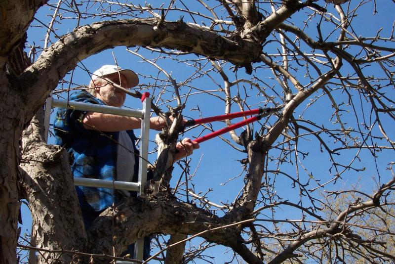 <p>Michael Allen / Winnipeg Free Press</p><p>Prune trees and shrubs while they are dormant in early spring or fall.</p>