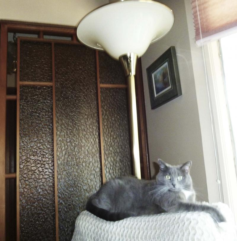 <p>Laurie Mustard / Winnipeg Free Press</p><p>A lamp turning on after being bumped by a clumsy cat may seem like a fluke, but in this house the explanation may be more supernatural.</p>