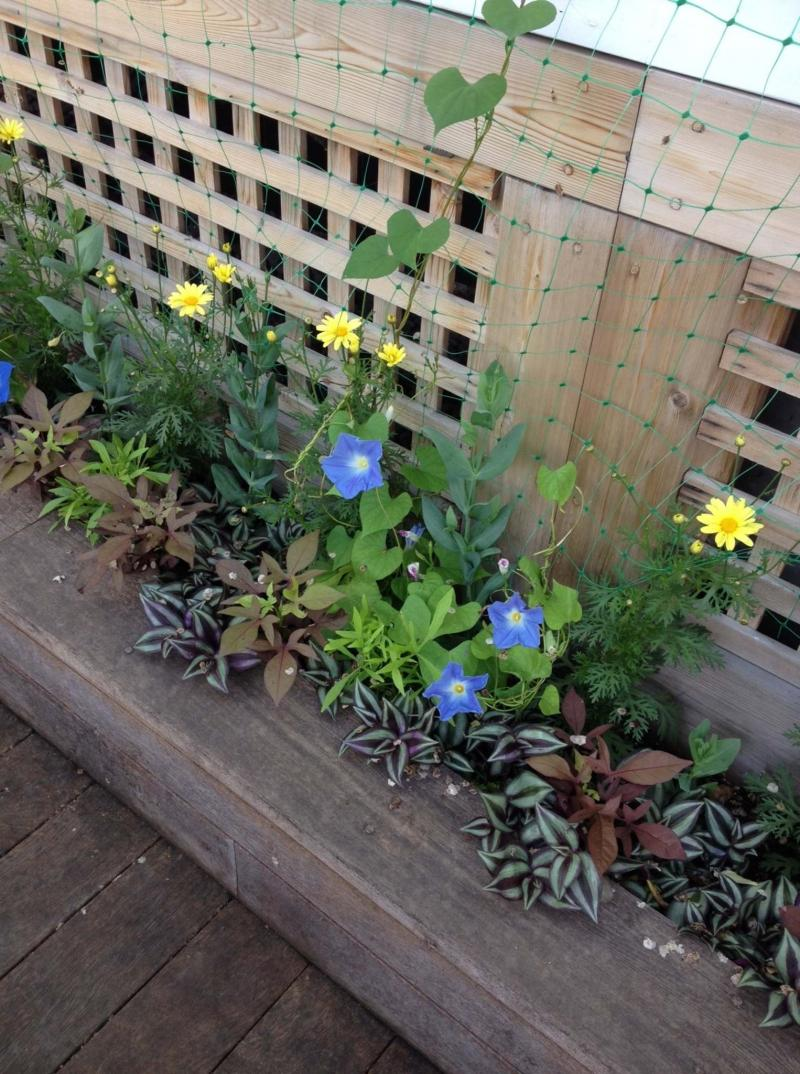 <p>Shelley Litman</p><p>A fine example of the effect of repetition can be seen in this linear raised bed.</p>