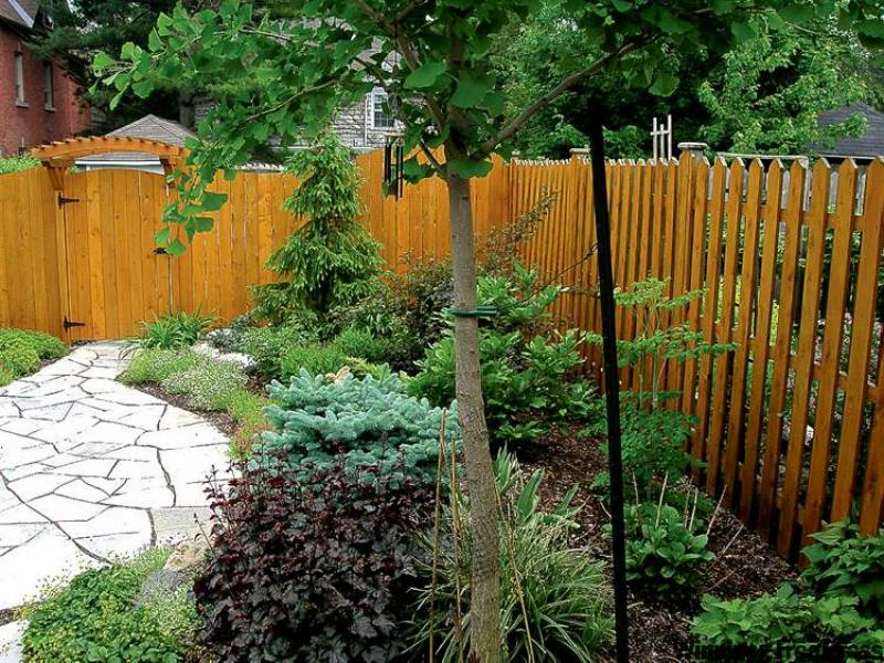 is a small backyard with dwarf conifers, small compact shade trees