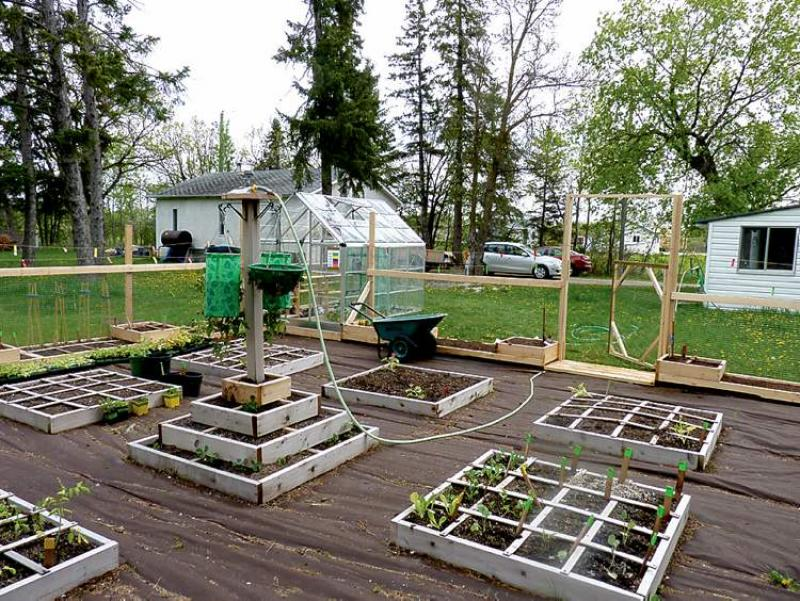 ... A Single Season Without The Backbreaking Hours Spent Weeding In A  Traditional Row Garden. This Lockport Square Foot Garden Features Numerous  4x4 Boxes.