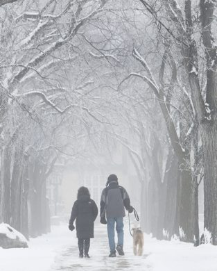 Susan and Gary Harrisonwalk their dog Emma on a peaceful foggy morning in Assiniboine Park  Standup photo November 27, 2011   (JOE BRYKSA / WINNIPEG FREE PRESS)