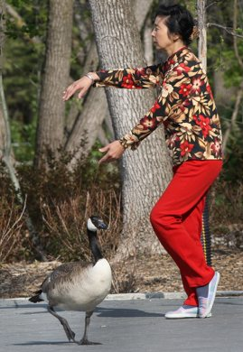 Jia Ping Lu practices tai chi in Assiniboine Park at the duck pond Thursday morning under the eye of a Canada goose  - See Bryksa 30 Day goose challenge Day 13- May 17, 2012   (JOE BRYKSA / WINNIPEG FREE PRESS)
