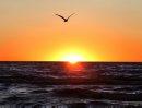 A bird soars ...