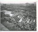 Winnipeg Free Press Archives If Day - World War II - (4) July 13, 1970 Second World War crowd scene, Legislative Grounds, 1942 fparchive