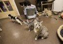 Kittens roam ...