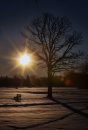 Chilling morning- The sun rises in Assiniboine Park Thursday morning as Winnipeg woke up to a chilly morning of -13C with a wind chill of -18C – Highs today for Winnipeg is set at -5 C- Standup Photo– November 15, 2012   (JOE BRYKSA / WINNIPEG FREE PRESS)