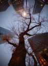 A lone tree ...