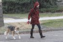 A woman walks her dog through a brief period of small hail in East Fort Garry, Thursday, October 25, 2012. (Trevor Hagan/WINNIPEG FREE PRESS)
