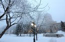Hoar frost covers trees at the Legislative Building from overnight fog that still covered much of the city around 9am, Saturday, December 15, 2012. (TREVOR HAGAN/WINNIPEG FREE PRESS)