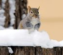 A squirrel ...