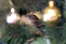 A sparrow flew ...