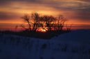 Sunrise at Oak ...