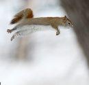 Jumping ...