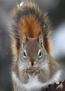 A squirrel ...