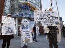 Animal rights ...