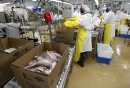 Filleting line ...