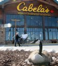 This Canada goose was brave setting up her nest at the front door of Cabella's new 72,000-square-foot building that opened in Winnipeg Thursday. The new store is  in the Seasons of Tuxedo retail development next to Ikea-Standup Photo- May 09, 2013   (JOE BRYKSA / WINNIPEG FREE PRESS)