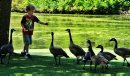 Ryan Davidson, 5, gives a gaggle of geese some of his bread while on a walk with his family at St. Vital Park Monday afternoon.   130805 August 05, 2013 Mike Deal / Winnipeg Free Press