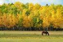 Autumn foliage ...