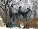 A pair of deer ...
