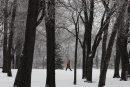 Postcard Morning- Don Warren walks through Kildonan Park amidst trees covered in fresh snow and hoar frost –Standup photo- Nov 28, 2013   (JOE BRYKSA / WINNIPEG FREE PRESS)