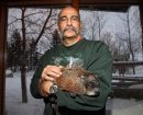 Andy Pulo from the Prairie Wildlife Rehabilitation Centre handles Winnipeg Willow at Fort Whyte Alive on Groundhog Day. 140202 - February 02, 2014 MIKE DEAL / WINNIPEG FREE PRESS