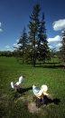 Voyageur Park ...