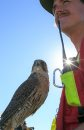 Bird control ...