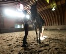 Katherine Page  uses the dry, indoor barn at Teske's Farm to ride and brush down her twelve-year-old horse- Chaos Saturday morning after her farm in Headingley was flooded in Friday evenings downpour.    Standup photo     Aug 30, 2014 Ruth Bonneville / Winnipeg Free Press   Ruth Bonnevilles