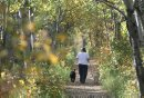 Lori Vanderlip walks her dogs Bosco  and Raymond, left, on the Preston Trail in the Assiniboine Forest during a beautiful fall morning in Winnipeg Thursday-Standup Photo- Sept 25, 2014   (JOE BRYKSA / WINNIPEG FREE PRESS)