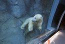 LOCAL . Polar ...