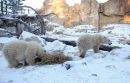 Two polar bear ...