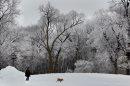 Lance Cartwright with his dog Max with hoar frost on trees in Kildonan Park Wednesday morning- Standup Photo- Jan 06, 2016   (JOE BRYKSA / WINNIPEG FREE PRESS)