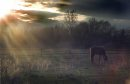 horse in sunset - marc gallant