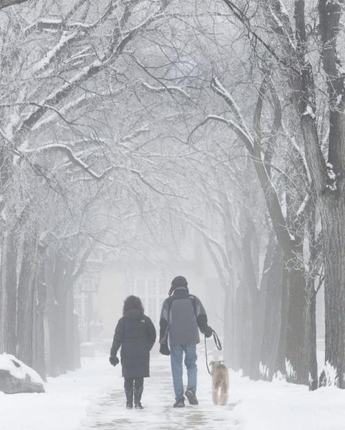 Susan and Gary Harrisonwalk their dog Emma on a peaceful foggy morning in Assiniboine Park – Standup photo– November 27, 2011   (JOE BRYKSA / WINNIPEG FREE PRESS)