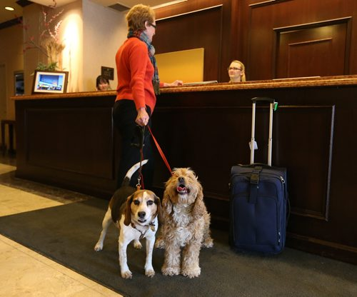 Delta Hotel general manager Helen Halliday stands with her four-year-old spaniel Sadie and 10-year-old beagle Finnegan at the front desk of the downtown Winnipeg hotel on on Sat., March 9, 2013. The hotel has a pet-friendly policy in place for guests. RE: Speirs story Photo by Jason Halstead/Winnipeg Free Press