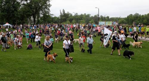 Hundreds of dogs and their owners walk together during Paws in Motion at Assiniboine Park. The event is Winnipeg Humane Society's biggest annual fundraiser. 130623 June 23, 2013 Mike Deal / Winnipeg Free Press