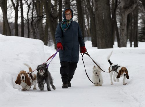 Stdup ,Dog walker  Lynn Norquay  walks her dogs  in Kildonan Park , a cooler day than Monday but the dogs stay cleaner she says . Mar. 11 2014 / KEN GIGLIOTTI / WINNIPEG FREE PRESS