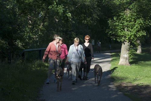 Heather Mclaren, Laura Peshka, Bev Martin and Shauna Keedian walk their dogs at Assiniboine Park during the nice weather Wednesday night. Sarah Taylor / Winnipeg Free Press