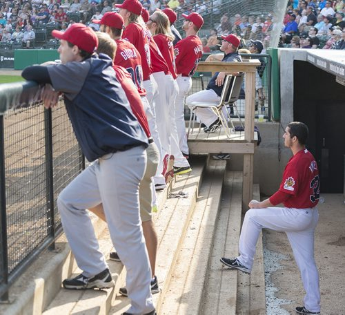 Goldeyes outfielder Sam Kimmel watches his teammates at bat during Saturday's game against Wichita Wingnuts. Sarah Taylor / Winnipeg Free Press August 9, 2014