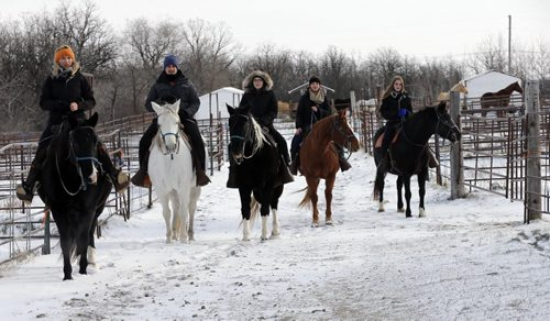 LtoR , teacher Taylor Homenick , Allen Chartrand , Taylor Fontaine, Rhianna Schell and Sara Kasian  take their horses out for a walk. LOCAL - Miracle Ranch  NICK MARTIN STORY: Argyle Alternative High School started a program this year called Healing with Horses, where eight at-risk students go to Miracle Ranch once a week for ten weeks . Students are paired up with the same horse each session. The program uses principles of equine therapy and as well taps into the social/emotional nature of horses for learning. NOV. 18 2014  KEN GIGLIOTTI / WINNIPEG FREE PRESS