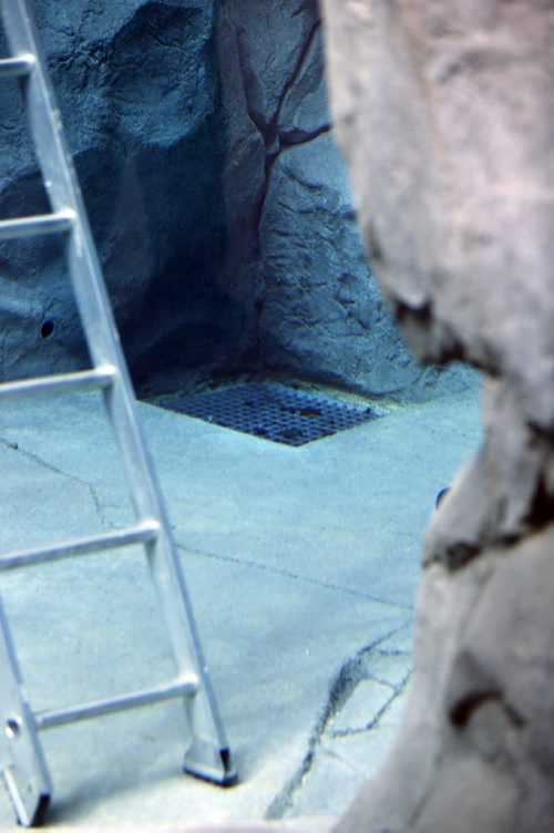 "LOCAL – Drains that take water out of the enclosures were responsible for the seal drowning . This ladder leads to a floor drain in the *** polar bear tanks with debris caught at the top screen . Zoo officials says  seal was caught near a side drain .  The remaining seal swims alone in an adjoining pool as seen  through the underwater viewing area  Tragedy has struck the Assiniboine Park Zoo as one of the harbour seals has drowned.The drain where the seal drowned is said not to be visible from the public area . ""The death of an animal is always hard and this is no exception,"" director of zoological operations Dr. Brian Joseph said in a statement. ""The harbour seals have been a great addition to the zoo and we know our visitors and volunteers will also be grieving this loss.""According to the zoo, the harbour seal became engaged with an underwater drain and was unable to free itself. The seal was one of two blind seals the zoo received from the Vancouver Aquarium this past summer. NOV. 25 2014 / KEN GIGLIOTTI / WINNIPEG FREE PRESS"