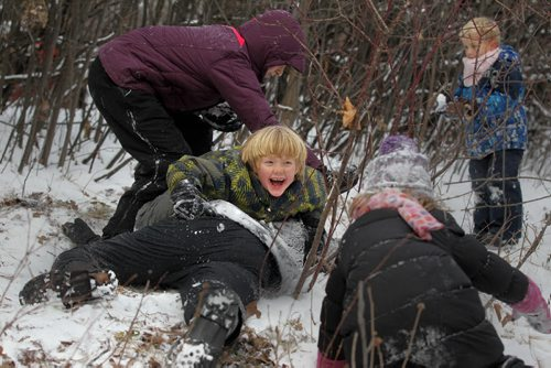 Seven-year-old Marcus Huebner piles on his friends dad, Justin Neufeld as his siblings and friends attack their dads with freshly-fallen-snow while having snow fights in the forest along Omands Creek Friday afternoon.   Standup photo Nov 20, 2015 Ruth Bonneville / Winnipeg Free Press